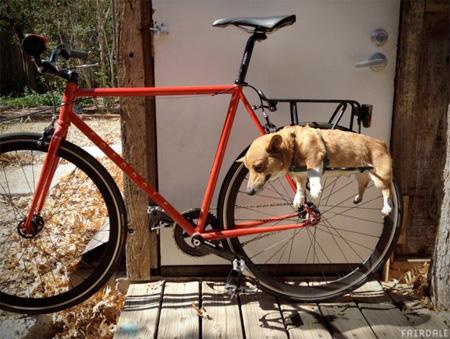 dograck06