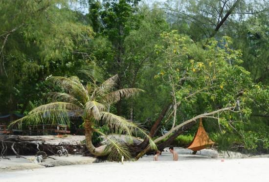 木に吊るされた巣のようなハンモックテント「Cacoon」
