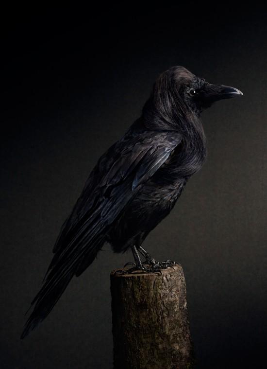 スタイリッシュな髪型の鳥