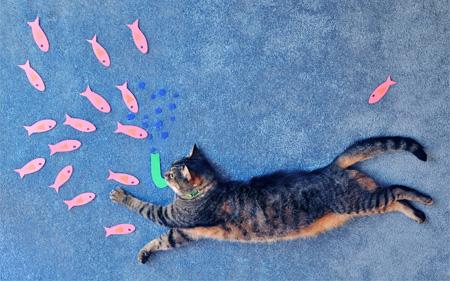 これはかわいい!キュートな猫の寝相アート。