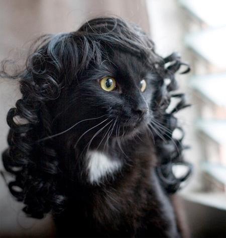 グラマラスでスタイリッシュな猫の為のウィッグ(カツラ)