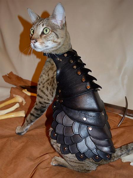 レザーアーマー(革の鎧)を着たかわいい猫3