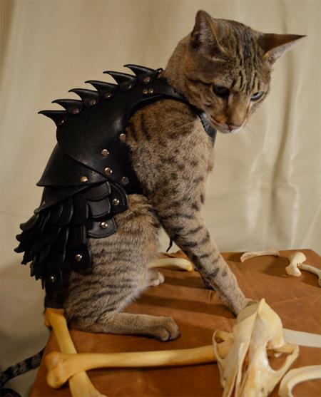 レザーアーマー(革の鎧)を着たかわいい猫