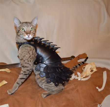 レザーアーマー(革の鎧)を着たかわいい猫2