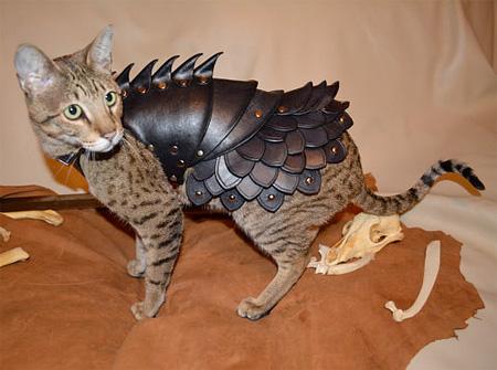 レザーアーマー(革の鎧)を着たかわいい猫4