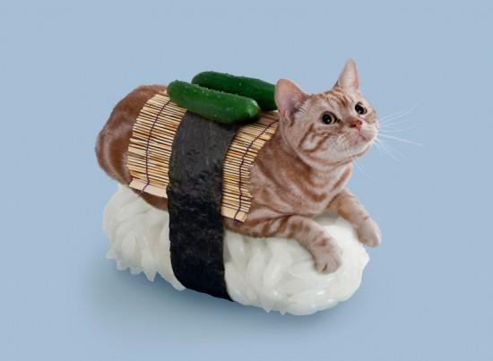 猫が寿司になったらどうなる?ねこずしニャー太